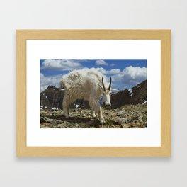 Mountian Goat Framed Art Print