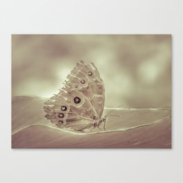 Patterned Wings Butterfly Over Leave Canvas Print