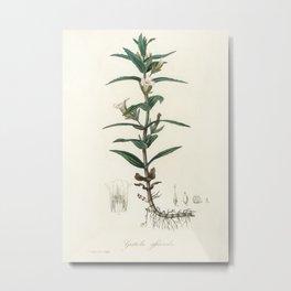 Gratiola officinalis  from Medical Botany (1836) by John Stephenson and James Morss Churchill Metal Print