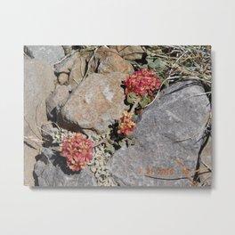 road trip, high mountain, plants Metal Print