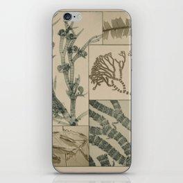 Patterns In Nature iPhone Skin