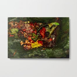 Saturated Autumn Metal Print