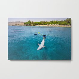 Bottlenose dolphin swimming with divers at the Dolphin Reef center research center, Red Sea, Eilat, Metal Print