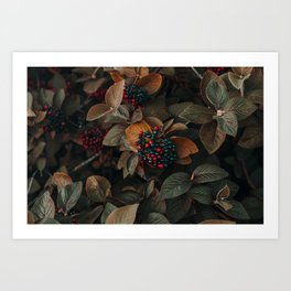 Fruit and Nature Art Print
