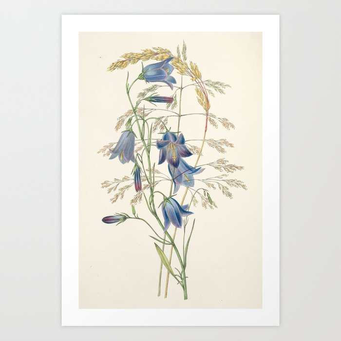 """Hare-bell and grass from """"The Moral of Flowers"""" (1833) by Rebecca Hey Art Print"""