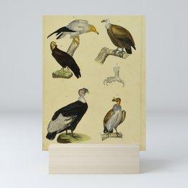 001 vultur fulvus sarcoramphus papa sarcoramphus gryphus cathartes percnopterus17 Mini Art Print