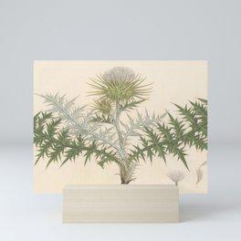 Naturalist Thistle Mini Art Print