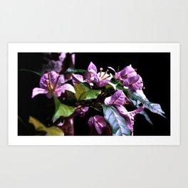 Purple Bromeliads Art Print