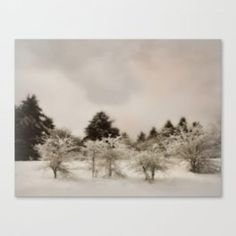 Perking up a snowy day ~ Winter forest  Canvas Print