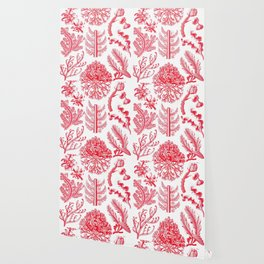 Ernst Haeckel Florideae Red Algae Wallpaper