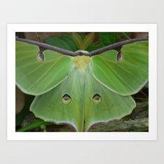 luna moth 2017 IV Art Print