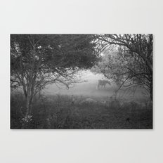 horse in the fog Canvas Print