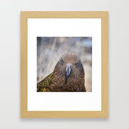 The Mountain Parrot Framed Art Print