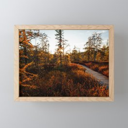 Larch Madness | Tamarack Trees in the Adirondack Mountains Framed Mini Art Print