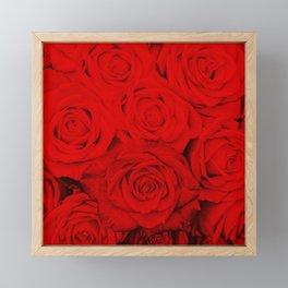 Some people grumble- Floral Red Rose Roses Flowers Framed Mini Art Print