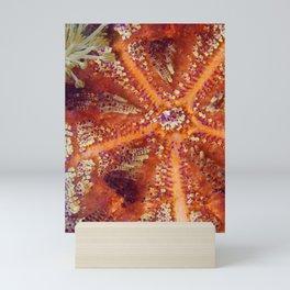 Fire Urchin Mini Art Print