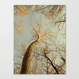 Dancing Birch Canvas Print