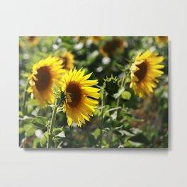 The German Sunflower Metal Print