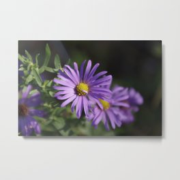 Lovely lavender aster Metal Print