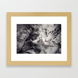 Mother cat and baby kitten in embrace Framed Art Print