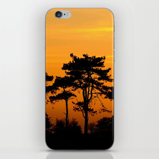 Sunset Trees iPhone & iPod Skin