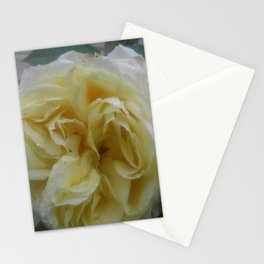White Rose Wet From the Rain Stationery Cards