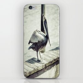 Sunbathing Pelican iPhone Skin