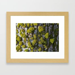 pattern by nature Framed Art Print