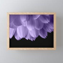 Ultra violet purple flower petals black Framed Mini Art Print