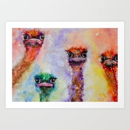 139. Colorful Ostrich Faces by M. Viljoen Art Print