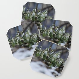 snow drop flowers - a sign of spring Coaster