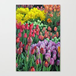 Colorful bunches of spring tulips Canvas Print