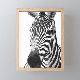 Black and white zebra illustration Framed Mini Art Print