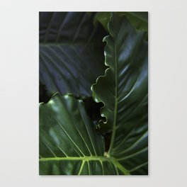 Edges Canvas Print