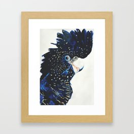 Victoria the Red tailed cockatoo Framed Art Print