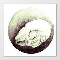 rabbitskull Canvas Print