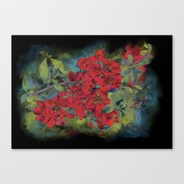 The flowering quince . Black background Canvas Print
