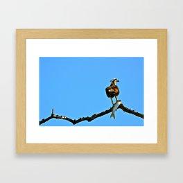Thanksgiving in the Everglades Framed Art Print