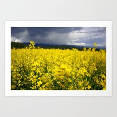 Yellow Fields Art Print
