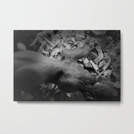 MY LITTLE PIG (Us And Them) Metal Print