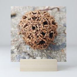 Seed pod Mini Art Print
