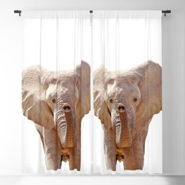 Elephant Art Blackout Curtain