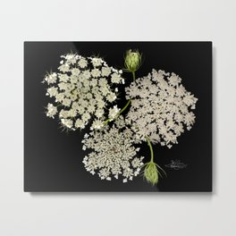Queen Ann's Lace, Scenography Metal Print