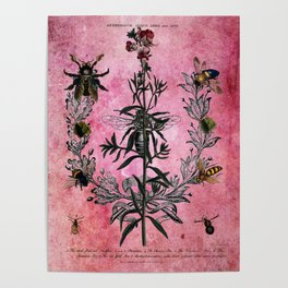 Vintage Bees with Toadflax Botanical illustration collage Poster