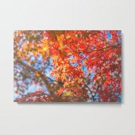 Autumn foliage in a maple tree at Kinkaku-ji Zen garden in Kyoto Metal Print