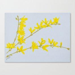 Forsythia Canvas Print