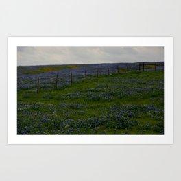 Bluebonnet Landscape Art Print