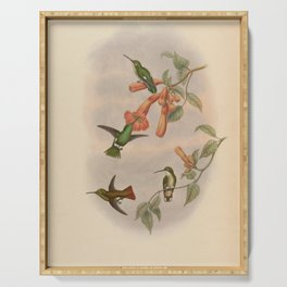 Vintage Print - A Monograph of the Hummingbirds (1849) - Coppery Emerald & Narrow-tailed Emerald Serving Tray