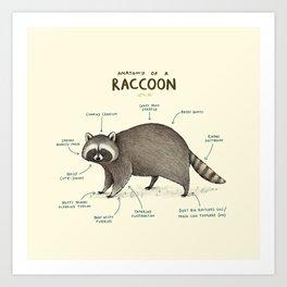 Anatomy of a Raccoon Art Print