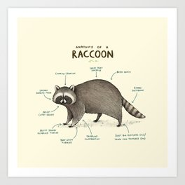 Anatomy of a Raccoon Art Print